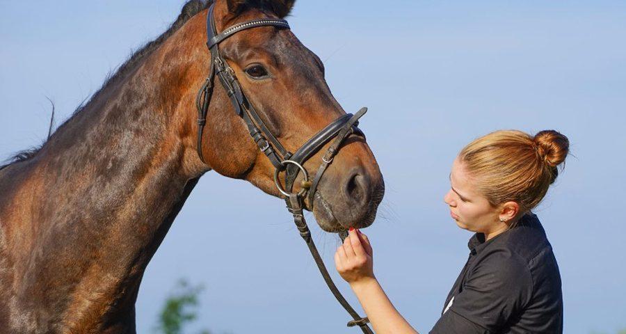 Bien choisir son cheval